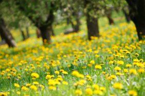 Приметы о майской погоде