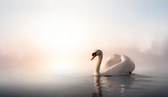 Чертог Лебедя