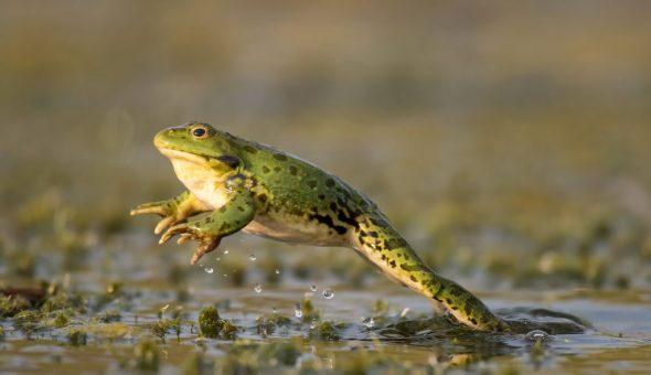 Скачущие лягушки 23 июля предвещают солнце