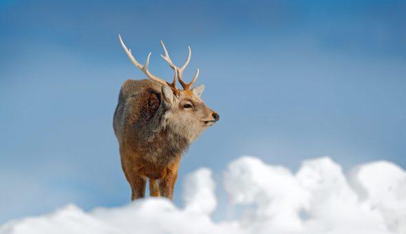Народные приметы о погоде по поведению животных