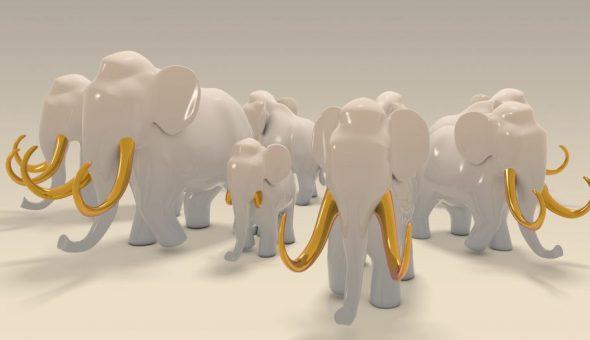 Все слоны разные